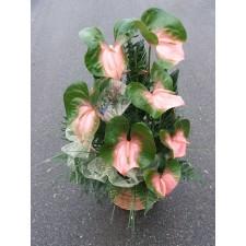 """""""Różowo zielone anthurium"""""""